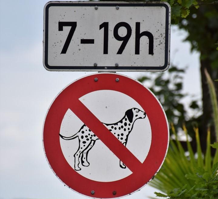 Les dalmatiens seraient interdits entre 7 et 19h mais pourquoi eux?